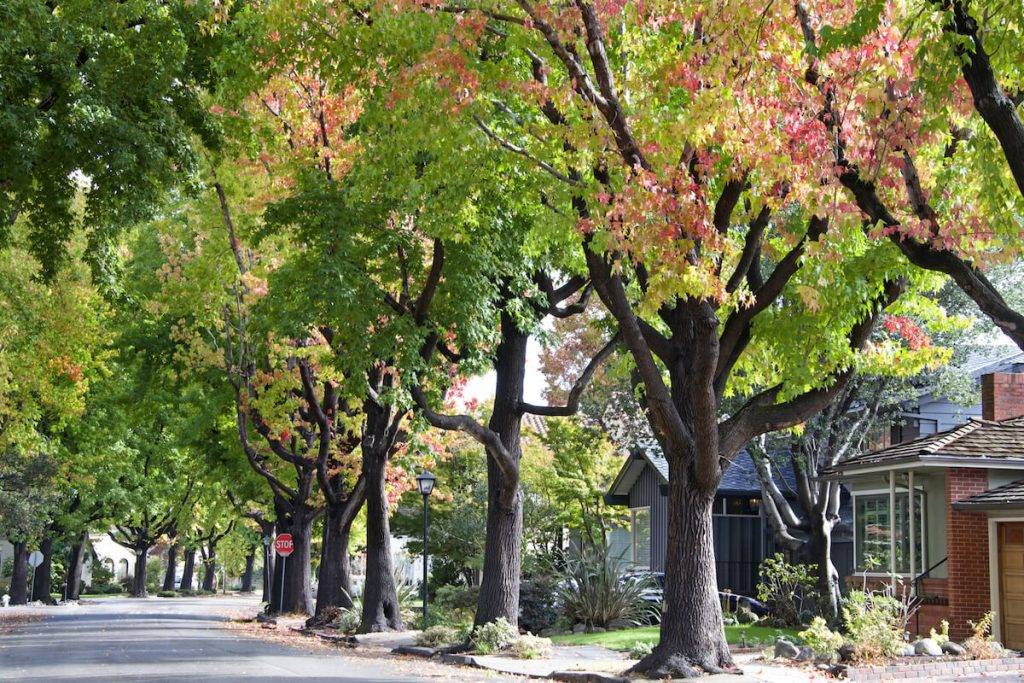 Tree lined residential street