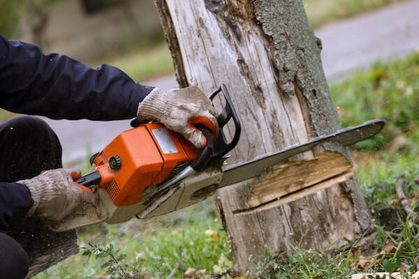 man cutting tree stump with chainsaw