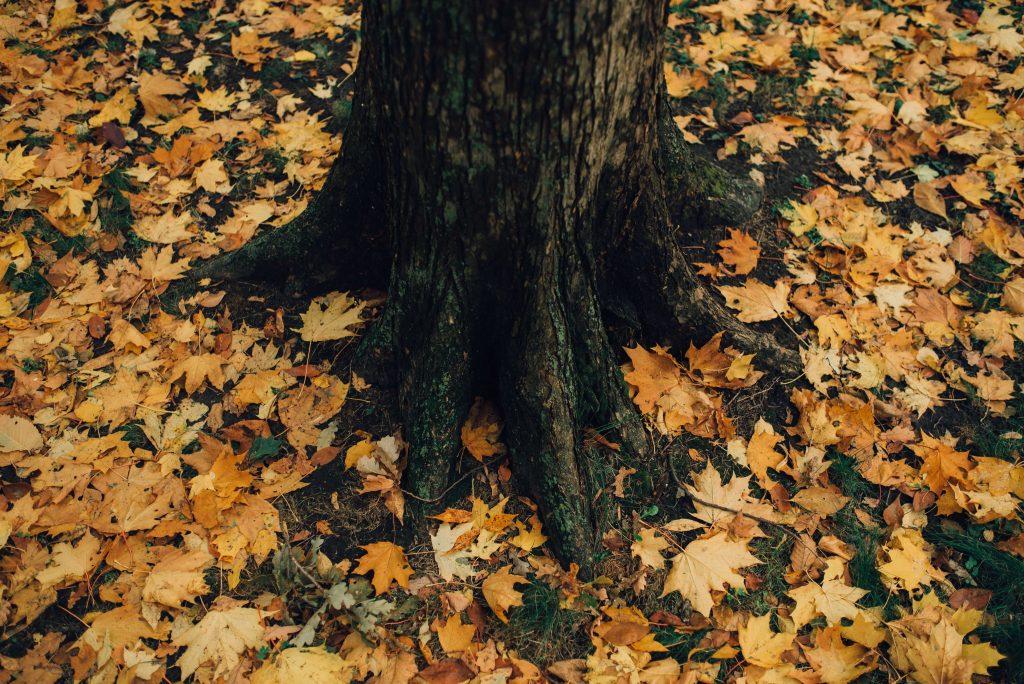 tree stump wood autumn fallen leaves